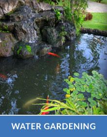 Water Gardening